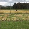 2017年 稲刈り