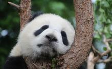 家の中で楽しめる動物園に行ってみませんか?【英語多読ニュース】