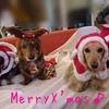 今年のクリスマスは。。。