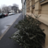 クリスマスツリーを捨てる日