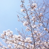 春を感じた日。赤坂見附から四谷へお散歩したら、咲き初めの桜が綺麗だった