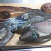 幻の魚「アコウ」とか、「ウマズラハギ」とかを食す。