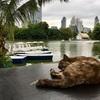 大都会バンコクの憩いの場「ルンピニー公園」が猫だらけだった(世界の猫探し27~29匹目)