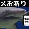海に入るならサメよけグッズを着けて人食いザメをシャットアウト!