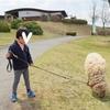 ヒツジのお散歩ができる! ポニーにも乗れる! 阿蘇ミルク牧場〈熊本県〉