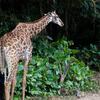 中国人の彼女と行く中国旅行 広州 長隆野生動物世界に行ってきたよ!