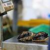 密漁アワビと訴訟対策