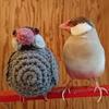 【フツウのコト15】文鳥と私-5-