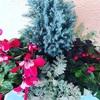 冬の準備のガーデニング お花とハーブ