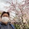 南蔵院のしだれ桜を見てきました。