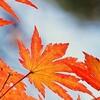 【風外本高】紅葉の名所、足助の香嵐渓で暮らした禅僧