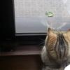 日本の夏*蚊取りニャンコ
