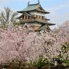 満開の高島城の桜