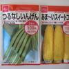 【家庭菜園】つるなしインゲンとトウモロコシの種を蒔きました