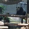 ハンモックの上で遊ぶパンダ 上野動物園
