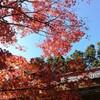 2018年11月、京都の愛宕山へ登山に行ってきました!