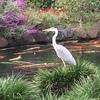 第8位 都会の真ん中に巨大な鳥!? 昭和女子大学「めっちゃ怖かった」