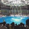 幻想的な水族館!アクアパーク品川