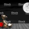 熊と満月 イメージストリーミング実例
