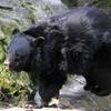 乗鞍岳は熊の生息地である事を認識して下さい