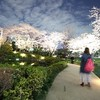 安田幸弘写真展「星空の散歩道」
