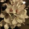 大学生最後のお花見シーズン