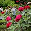 巣鴨とバラ咲く旧古河庭園
