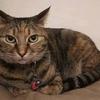 保護猫チャコ