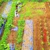 7月の菜園!土用の土いじり!