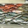 ジギング&ふわふわ&エサ釣りで美味しい魚がたくさん釣れました🎵  【  日本海フィッシング 】
