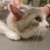 三毛猫さんpart2