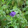 紫の花たちと、はじめて見たちっちゃい花
