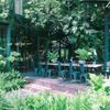 まるで森の中にいるようなカフェ「Library Cafe(ライバーリー カフェ)」@プラカノン