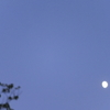 秋月moon