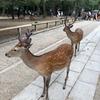奈良公園に行ってきました。7年ぶりかなあ・・・
