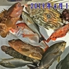 4月は何を釣りますか❓【 釣魚録 / in 日本海 】※順次更新👍
