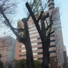ビルと街路樹