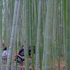竹林の中の人力車です