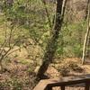 追分荘に駆け足の春