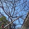 *今日は立春 !