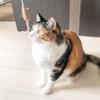 【愛猫日記】毎日アンヌさん#88