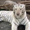 来て見て触れる「東武動物公園」のかわいい動物たち