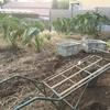 【イベント情報「まちの先生」プロジェクト〜農家の方から学ぼう〜冬の野菜収穫と農業体験
