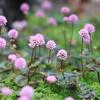 ちっちゃい庭の草花たち~立夏の前に