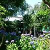 紫陽花の名所、白山神社へ