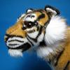 次回の寅年には、虎は絶滅しているかもしれない