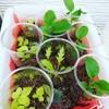 水耕栽培 葉物が急成長