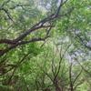 まるで森。とにかく涼しい、最近お気に入りの快適な公園