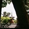 中山法華経寺仏塔・Rollei35S fuji cn200