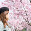 桜撮影第2弾。